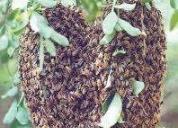 Servicio de fumigacion contra abejas