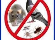 Fumigaciones para eliminar todo tipo de insectos 7924646
