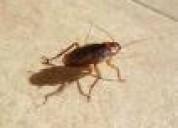 Fumigaciones hormigas  cucarachas  7968942.