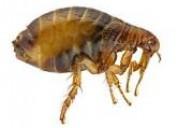 Fumigaciones hormigas chinches  7968942. 989957783