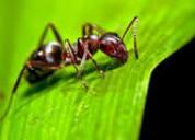 Fumigaciones pulguillas insectos  989957783 -