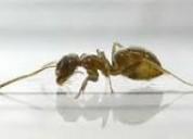 Tinees insectos fumigue ya   989957783 . 7968942