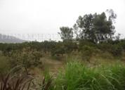 Vendo terreno agriola en huaral 10hectareas