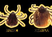 Fumigaciones chosica insectos  975255535 .
