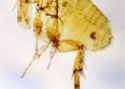 Garrapatas pulgas eliminamos fumigamos 989957783